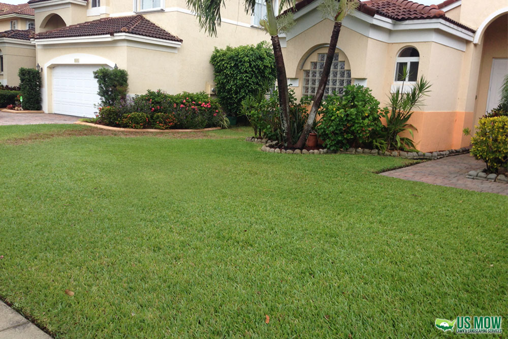 Front Lawn Mowing